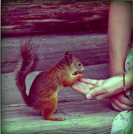 Manger dans la main de quelqu'un cropped