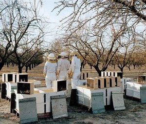 Beekeepers cropped
