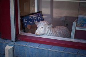 Steven quinn sheep