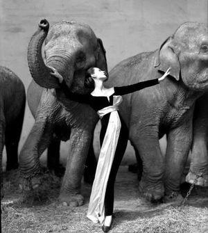 Dovima and the elephants cropped