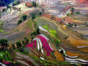 National geographic terraced rice field china