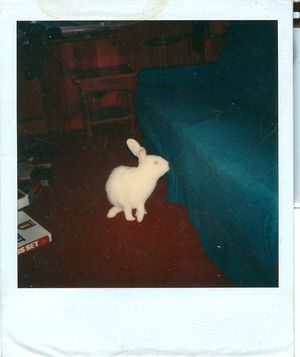 PolaroidRabbit