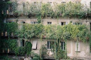 0sylvain emmanuel p plant balconies