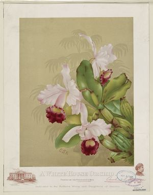 Orchid-WhiteHouse-1892