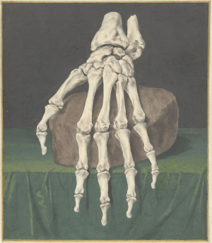 L'Admiral-Jan-Study-of-skeleton-hand-before-1773-watercolor-Rijksmuseum
