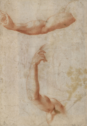 0-Bandinelli-Baccio-follower-Two-studies-of-right-arms-c1520-60-drawing-Royal-Collection